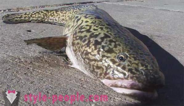 uhvatiti mjesto za upoznavanje s ribama krstarenje dating fit stil života